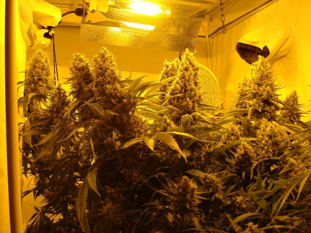 & pros and cons of sticking a 1m x 1m tent and a 400hps light in the attic