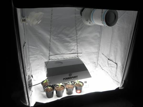 [Archive] - THCtalk.com - Cannabis Growing Forum u0026 Cannabis u0026 Marijuana Discussion Forums : grow tent with carbon filter - memphite.com