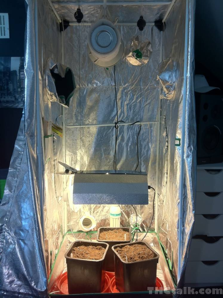 Grow tent setup & Grow tent setup - Welcome to THCtalk.com Cannabis Gallery
