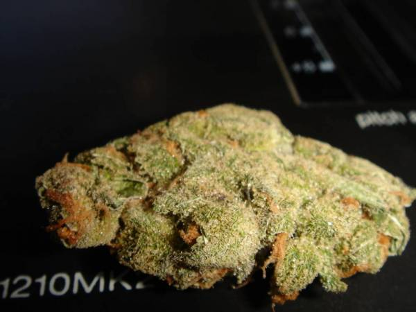 Super lemon haze is super [Archive] - THCtalk com - Cannabis